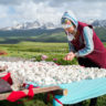Kyrgyzstan: homemade mare's cheese